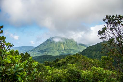 Forêt tropicale de Dominique, paradis de la randonnée
